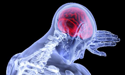 brain-3168269_1920